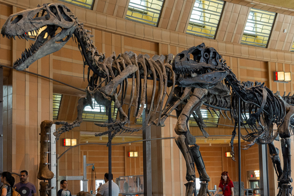 The Museum of Natural History & Science has several tours, shows, and other activities for seniors.